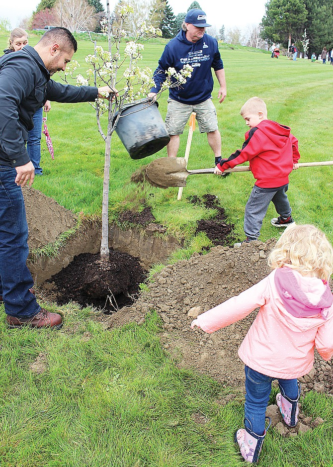 Teddy Bear Corner Preschoolers, left to right, Brayden Harvey and Aria Leidig help Alex Gonzalez and Mike Carpenter plant one of 18 new flowering trees at north end of Grandview's Dysktra Park Thursday. The children were joined by their grandparents for the annual Arbor Day event. Similar tree plantings will take place at area schools and Yakima Arboretum this week.