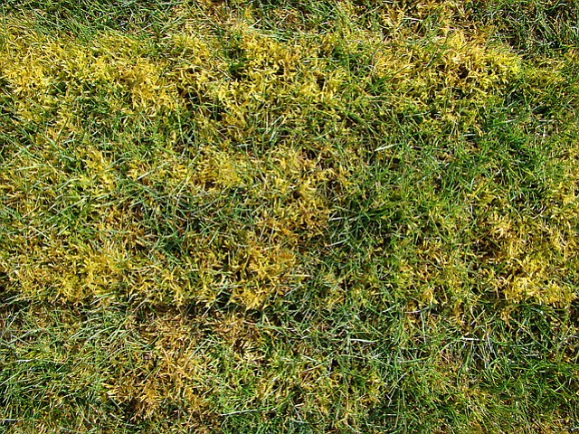 Moss will continue to invade lawn unless preventative measures are taken