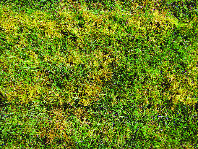 Moss will continue to invade lawn unless preventative measures are taken.