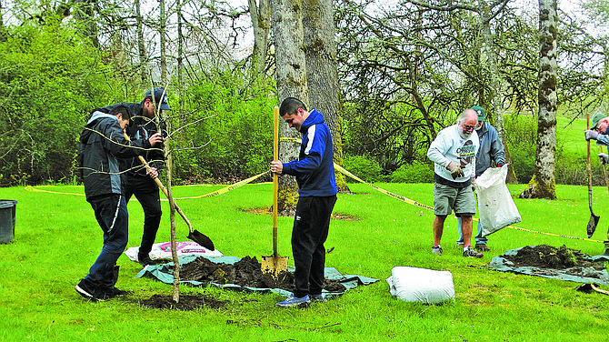 Volunteers plant trees at Gentle Woods Park in Monmouth, part of Monmouth's Arbor Day celebrations. Monmouth is celebrating being named a Tree City USA for 15 years in a row. Trees also were planted at Madrona Park and Monmouth Elementary School.