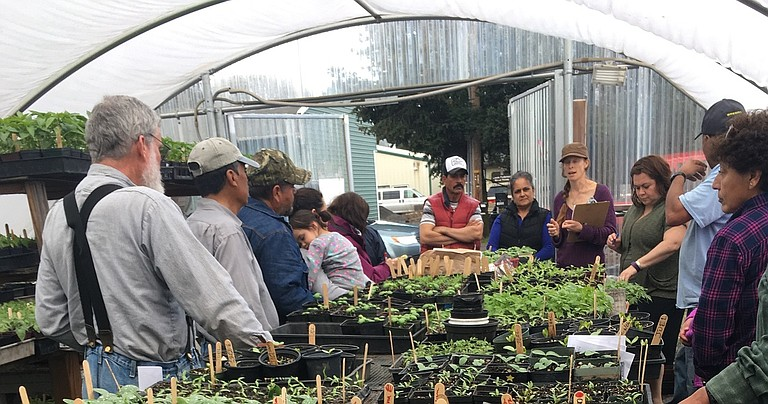 Raices Cooperative Farm will hold its third annual organic plant sale just before Mother's Day in the Next Door, Inc., parking lot on Tucker Road.