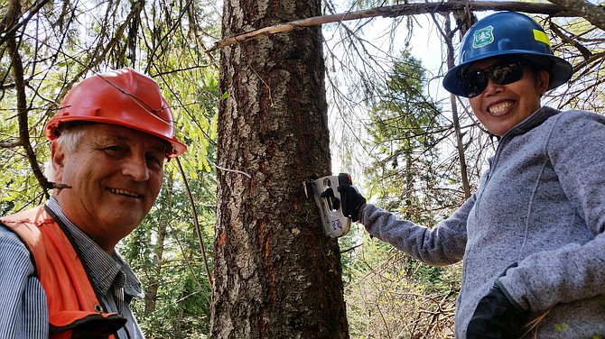 U.S. Forest Service employees work to staple bubble caps filled with pheromones to trees adjacent to burn areas. More than 600 acres of forested state lands affected by the 2015 wildfires near Kamiah were recently treated to prevent infestations of bark beetles.