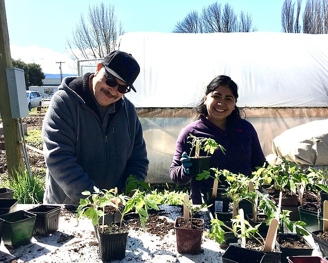 Raices members transplant organic starts in preparation for the annual sale on May 13. Hundreds of starts will be available and include vegetables and flowers.