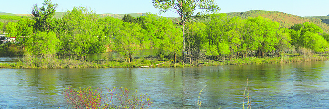 The Okanogan River - about a mile south of Tonasket - experiences minor flooding last week as warm weather increased snowpack melting and runoff.