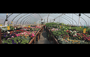 Pictured are the rows of plants that will be available for sale this Saturday, May 13, from 9 a.m. to 2 p.m. at the annual plant sale by the Wasco County Master Gardeners and the juvenile program at the regional jail.