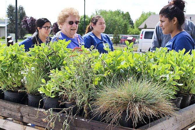 YV-Tech nursing students help Lucille Rohman pick succulents for her garden during the plant sale Friday.