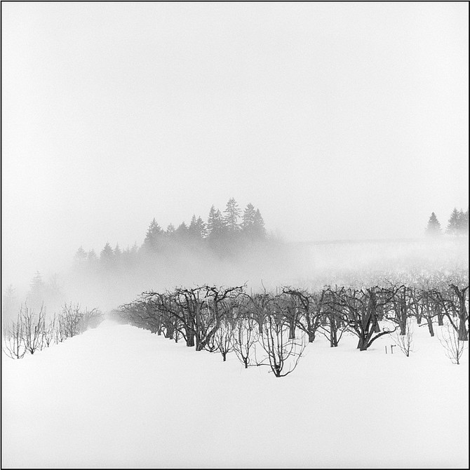 Fog and Trees: Forceful linear elements, such as troops of receding trees or pronounced horizontal, vertical, or diagonal lines punctuate and orchestrate each composition.