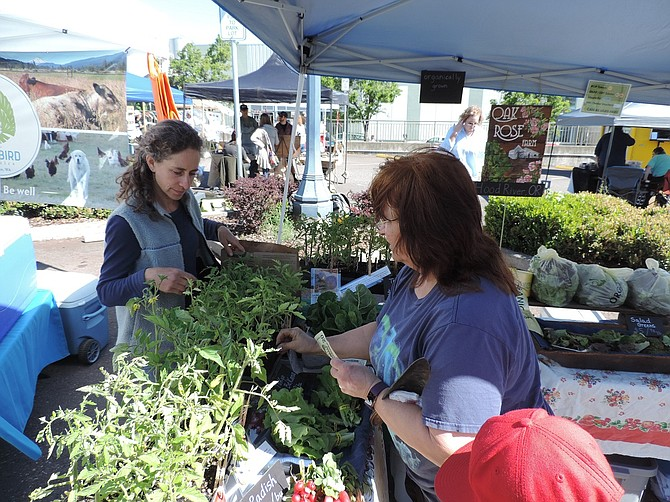 OAK ROSE Farm's Bonnie Cox, left, sells tomato starts Saturday to Jody Pink of The Dalles, who was already equipped with a trowel. Oak Rose, on Sunset Road west of Hood River, is among the market's newest vendors.
