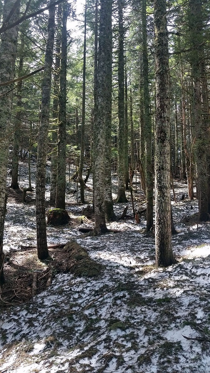 SNOW obscures a portion of the Pacific Crest Trail in the Rock Creek area north of Stevenson late last month.