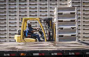 A forklift operator unloads bins of fresh cherries from a flatbed trailer Wednesday at The Dalles Fruit Company in Dallesport.