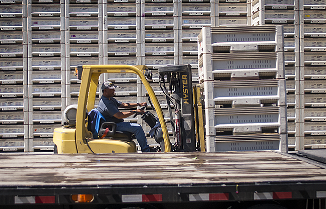 A forklift operator ­unloads bins of fresh cherries from a flatbed trailer Wednesday at The Dalles Fruit Company in Dallesport.