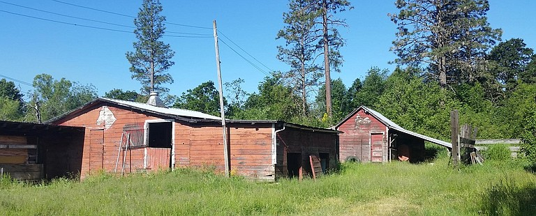 """I was lucky to buy a Mike Kitts house south of May street which looks out on the Tanner Ranch. This historic ranch with its iconic red barns including murals painted on them by a 1940s Hood River artist has provided continuous inspiration to me as an artist. This land which the city terms 'vacant land' has natural springs and is in a migratory bird route with many species of birds calling it home."" -- Abigail Merickel"