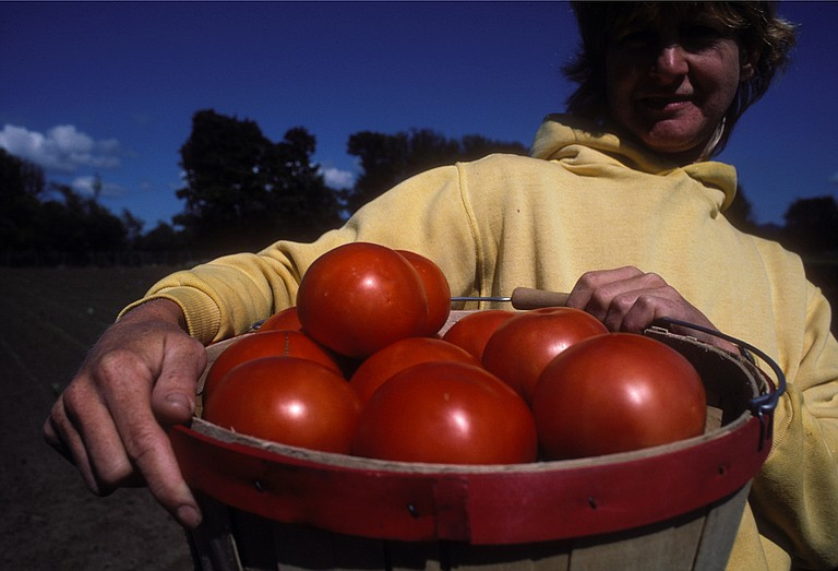 To reduce the risk of food poisoning, practice good habits in the garden such as using clean containers for harvest.