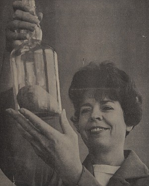 September 14, 1967: Building a ship in a bottle is one thing — getting a pear in one is quite another. The pear in the bottle Maryann Hanks examines was put there by John Hounsell. He put a Bartlett limb in the bottle with a tiny pear on it, let it grow, and pulled the limb out when the pear ripened. Hounsell got the idea from a Sunset magazine article on pear brandy. He has a dozen of the unusual bottled pears in storage, the fruit of a tedious process.