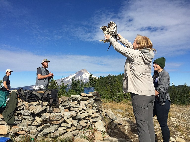 The Hawk Migration Festival comes to the Mt. Hood Cultural Center on Sept. 23.