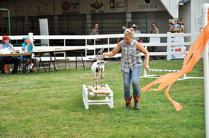 Youths lead their goats through the annual goat obstacle course competition at the Polk County Fair.