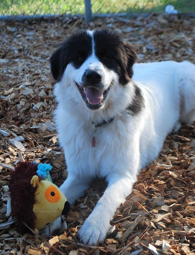 Izzie is this week's Adoptable Pet of the Week.