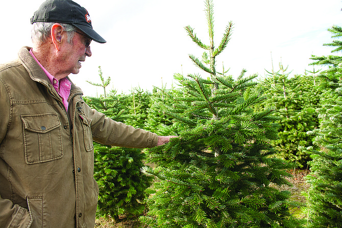 Ken Brown, the co-owner of Westwinds Farm in Dallas, talks about the trees at his farm that are ready to sell.