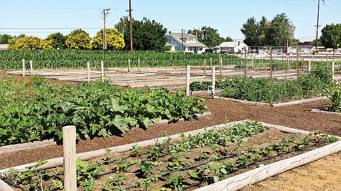 The sight of carefully cultivated garden plots off North 16th Street is now a thing of the past after a four-year run.