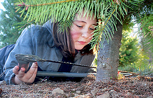 "Alexis ""Lulu"" Taylor, 10, of Sunnyside, Wash., cuts a tree at Green Ridge Tree Farm, 3715 Browns Creek Road, The Dalles."