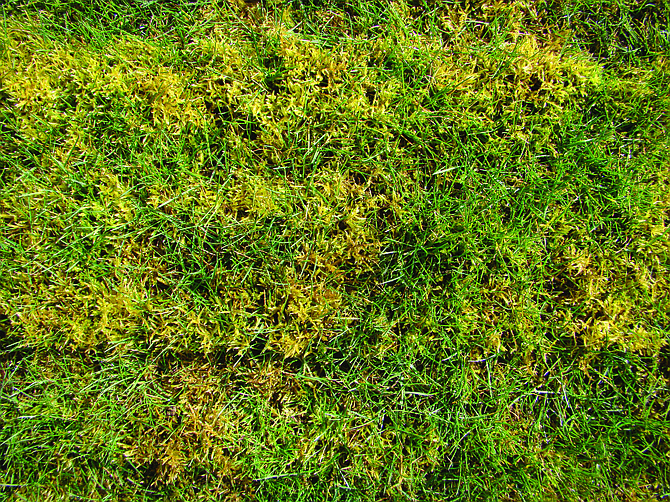Maintain healthy grass to keep moss from invading.