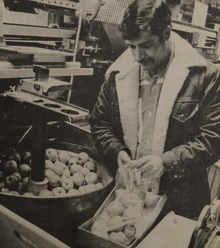 """January 5, 1978: Santos Mariscal is bagging four and a half-pound sacks of apples that will soon be going to market from Walter Wells and Sons Fruit Company. The company is such that a distributor can call during the day and receive his order that night. """"We try to anticipate the needs of our customers and package to meet those needs,"""" Bill Wells, in charge of sales, says."""