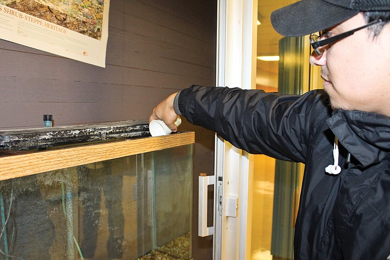 Lower valley students to hatch salmon