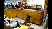 Grangeville Police Officer Wes Walters and his dog, Taser, were recently certified through the Idaho POST Academy for completing 80 hours of controlled substance canine training. At the May 19 Grangeville City Council meeting, Walters and Taser conducted a demonstration of their detection abilities with drug training aides. A 4-year-old German Shepherd, Taser is certified to find methamphetamine, marijuana, heroin and cocaine. He is the first GPD narcotics detection dog in the city's history.